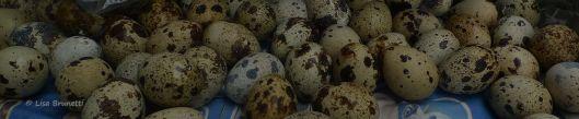 quail eggs P1520133 last one