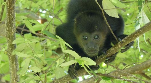 Who wouldn't be enchanted by a precious monkey like this?  I was looking up, and it was looking down!