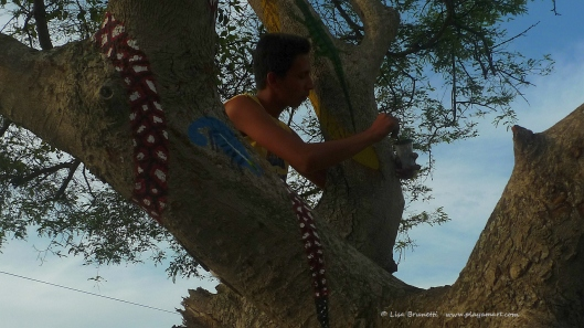 Jose Luis in Garrobo Tree - See 'The Highest of Arts.""