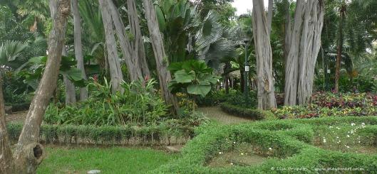 P1670374 gye botanical gardens trees