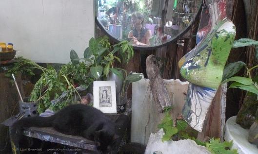 P1670476 museo loco mirror cat y reflections