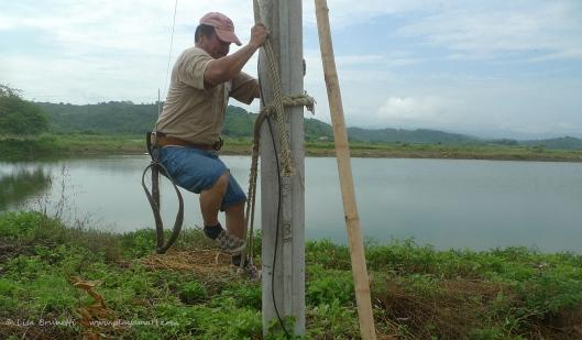P1680238 climbing post