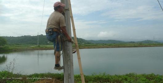 P1680240 electricity climbing post