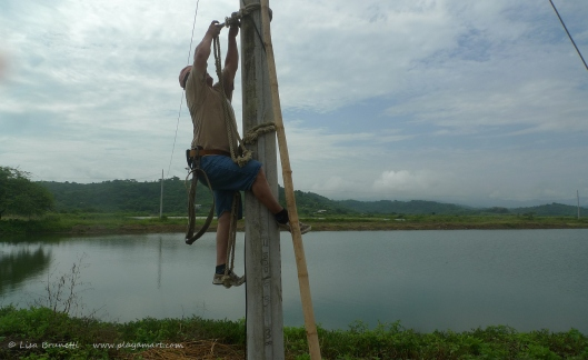 P1680242 electricity climbing post