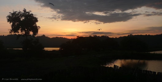 Sunrise over the shrimp ponds...