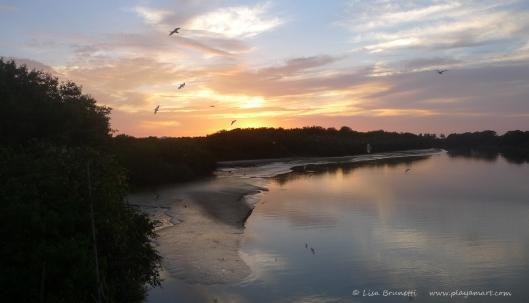 P1680445 sunset birds rio jama