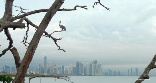 panama pelican view of city