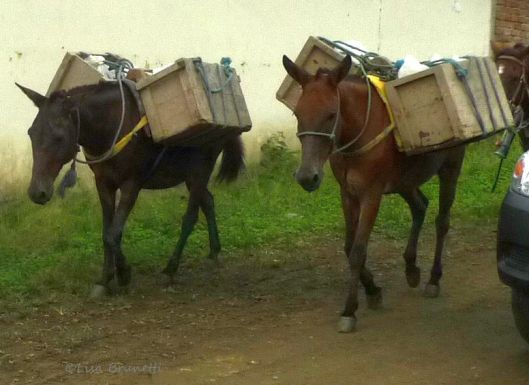 The horses bring the boxes of cheese to the little community of Santa Teresa, about one hour down four-wheel-drive roads!  My friend Xavier meets his workers every Friday and drops off supplies before returning to Jama with the queso fresco.