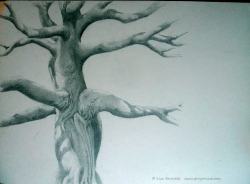 Ceibo Tree - pencil - Finished!