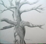 Ceibo Tree - Pencil - Not quite finished...
