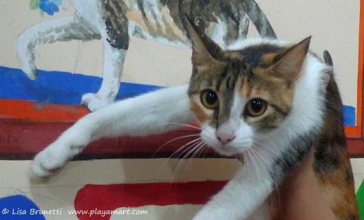 P1750054 restaurant cat