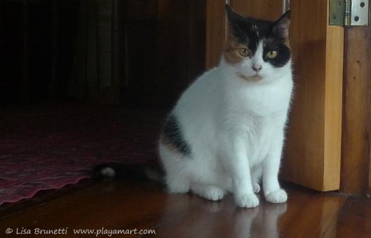 P1750766 moana the cat