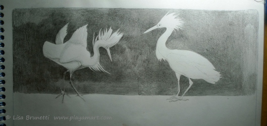 Last week when traveling, I finished the drawing of the snowy egrets.