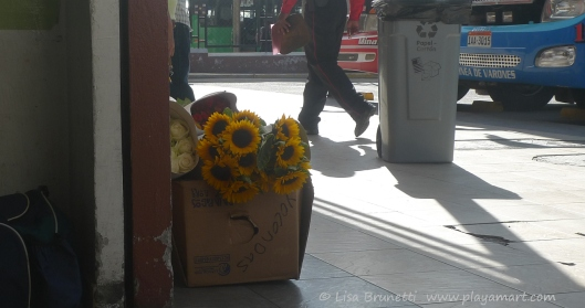 P1760889 sunflowers quito terminal