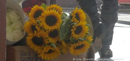 P1760891 galapagos bound sunflowers