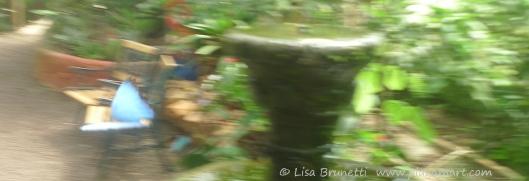 P1760961 butterfly morpho mindo