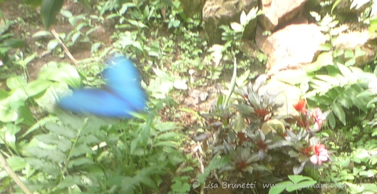 P1770010 butterfly blurr