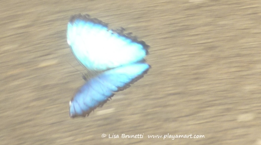 P1770015 morpho blurrr