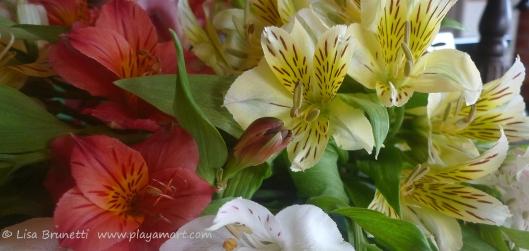 P1770269 flowers alstromeria