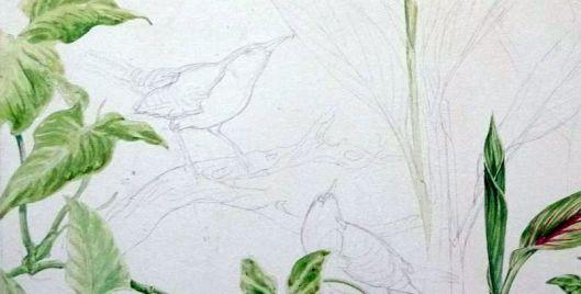 Rufous naped wrens