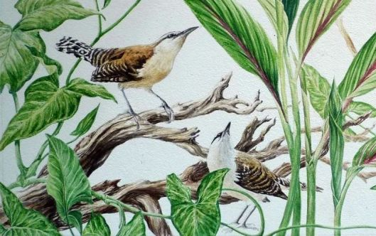 WRENS in progress1