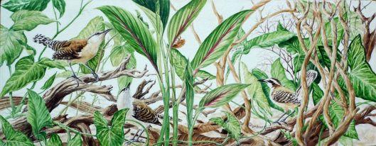 Rufous-naped wrens - Acrylic