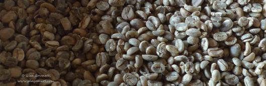 P1620407 coffee beans closeup