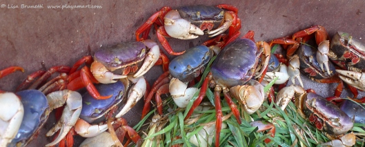 Local fishermen sell these colorful crabs in town.
