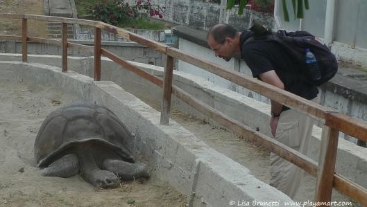 Bob meeting Miguelito, a Galapagos turtle in Bahia de Caraquez.