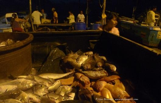P1770925 FRESH FISH