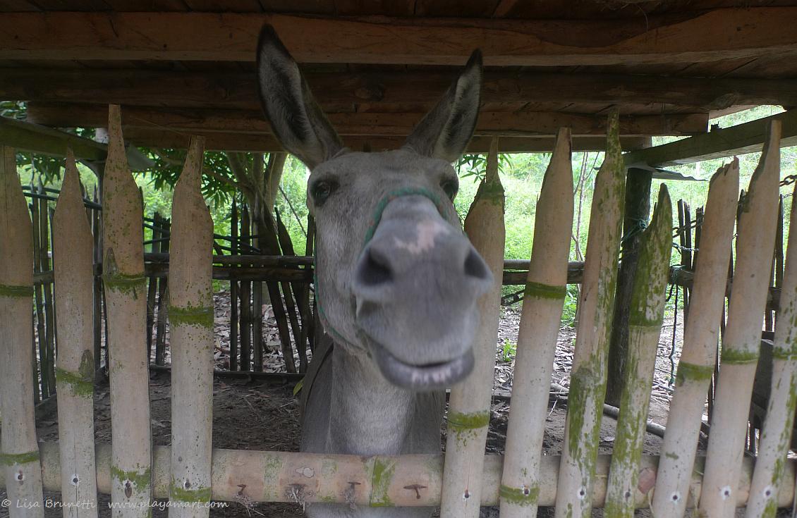 P1780208 burro