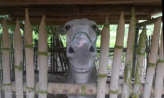P1780209 burro