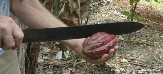 P1780328 MACHETE y cacao