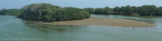 P1800420 rio jama birds