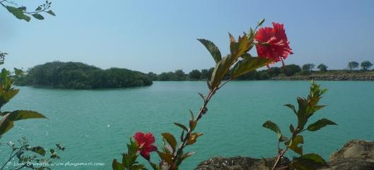 Rio Jama Hibiscus