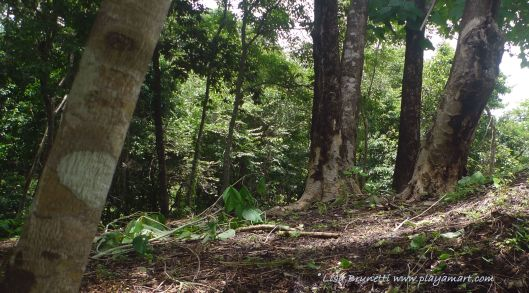P1800815 milena trees