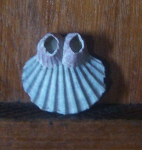 gleanings shell