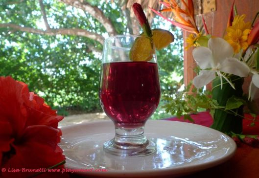 Hibiscus tea straight from that green hedge in the background.