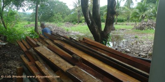 Lumber from the rancho; hibiscus hedge sorely missing behind the mango tree.