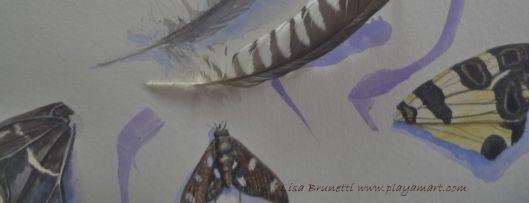 P1840666 timeout for art butterflies