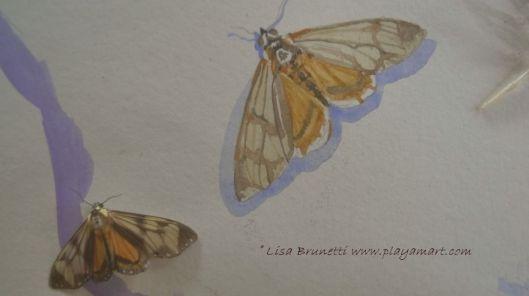 P1840677 timeout for art butterflies