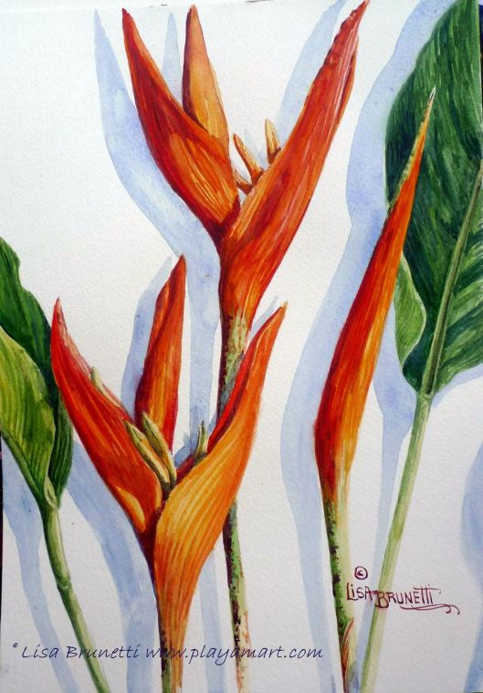 Heliconia - Watercolor