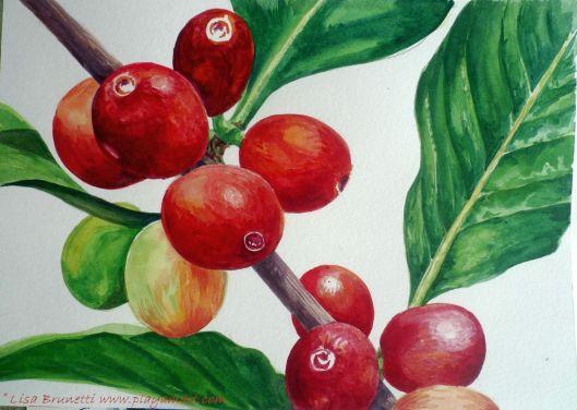 coffee- watercolor i progress