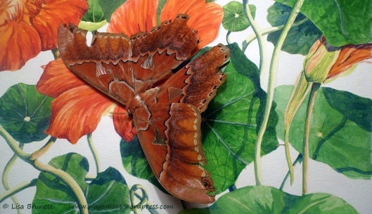 The nasturtium watercolor is quite popular!  Do you think that it confused the moth?