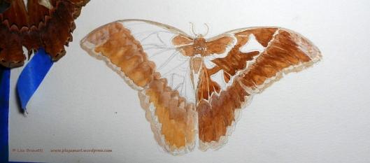 00 06 P1870860 moth