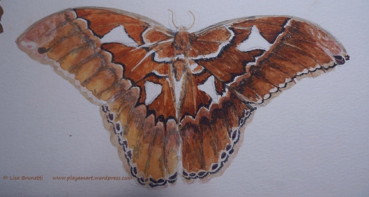 00 08 P1870864 moth watercolor
