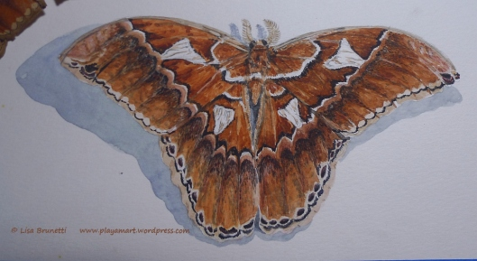 00 09 P1870865 moth watercolor