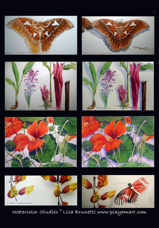 00 11 WATERcOLOR STUDIES LISA B 2