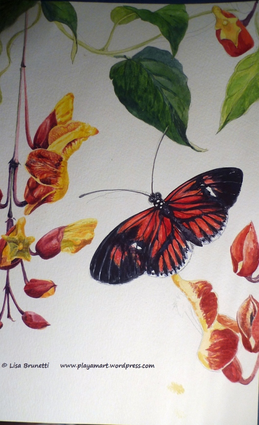 P1870765 WATERCOLOR PENCIL BUTTERFLY FLOWERS FOLIAGE