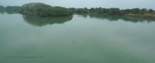 P1890162 sea tyrtle rio jama